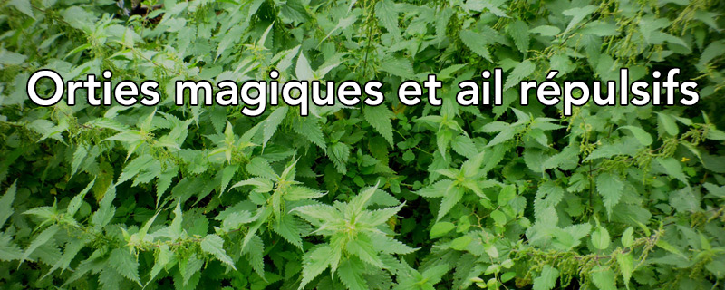 Orties Magiques Et Ail Répulsif…